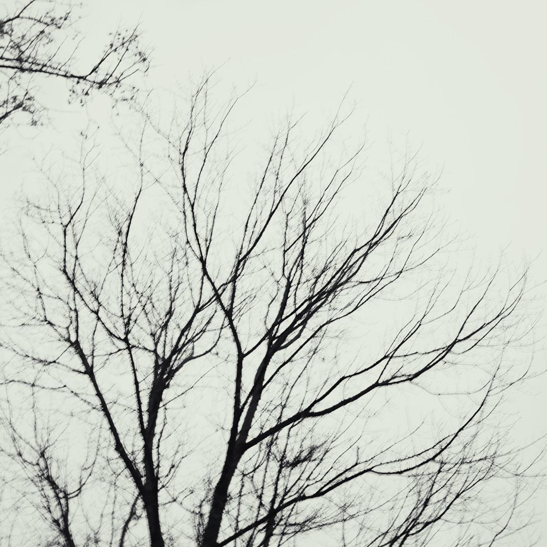 """minimalistische Fotoserie """"Veins"""" MPPS0151"""