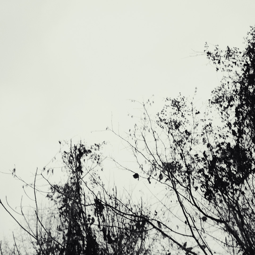 Veins | Konzeptionelle Fotografie | Minimalismus