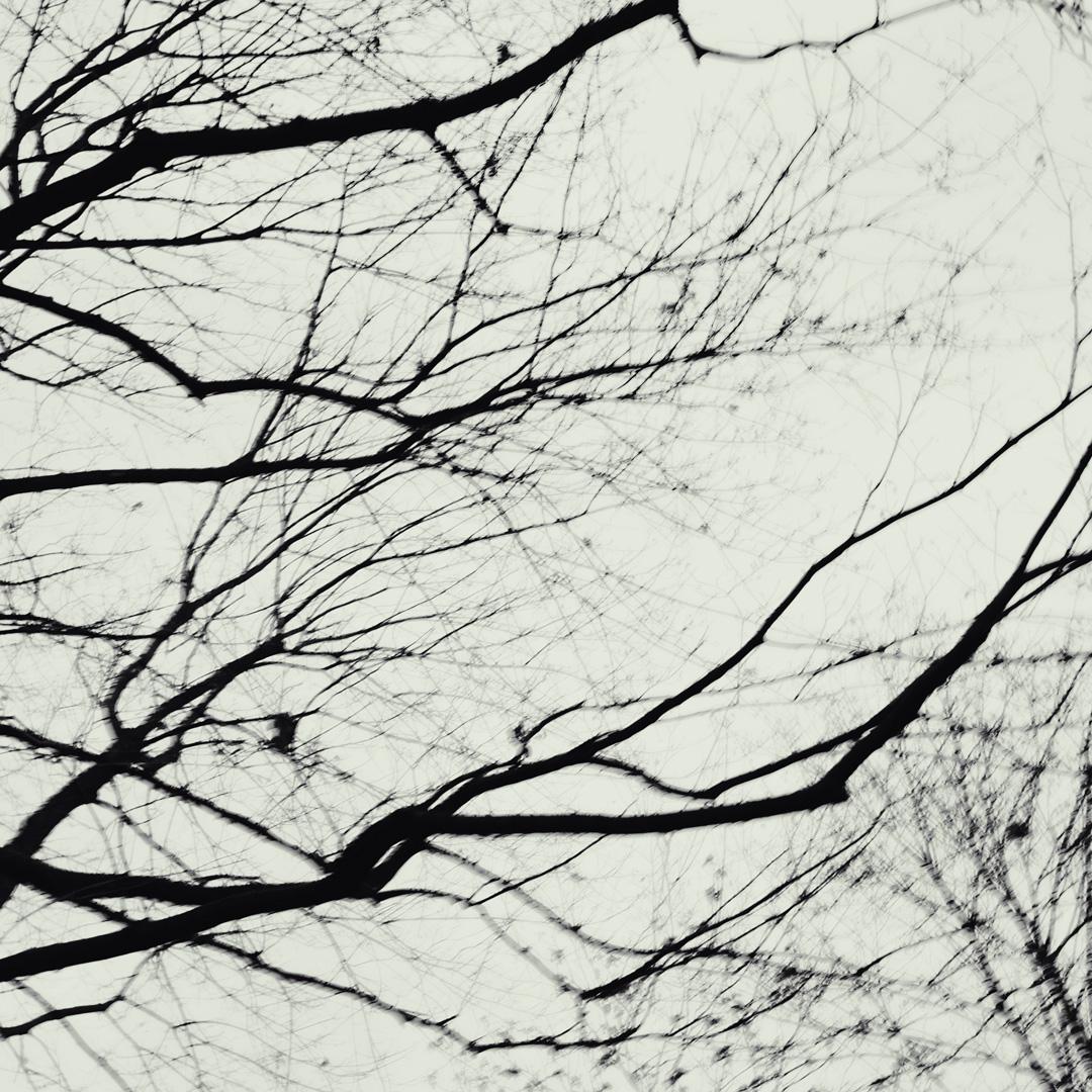 """minimalistische Fotoserie """"Veins""""  MPPS0170"""