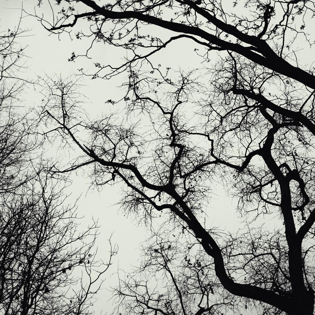 """minimalistische Fotoserie """"Veins"""" MPPS0176"""